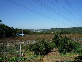 三灣梨的家梨園冬景